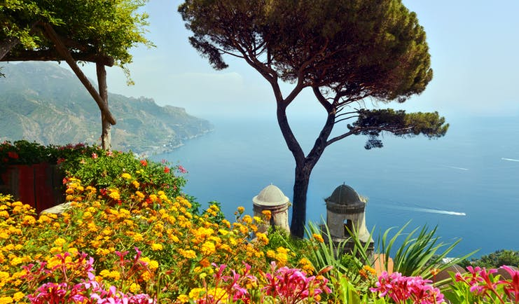 Two umbrella pines on hillside overlooking sea in Ravellao with church towers and yellow flowers in front