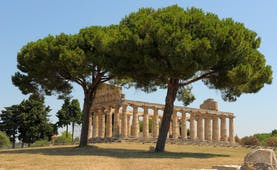 Ruined Greco-Roman temple at Paestum with columns intact and umbrella pines