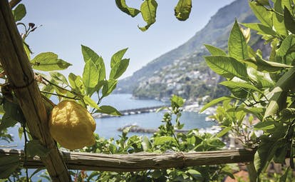 Hotel Caruso Amalfi Coast lemon growing on tree beach and mountainside in the background
