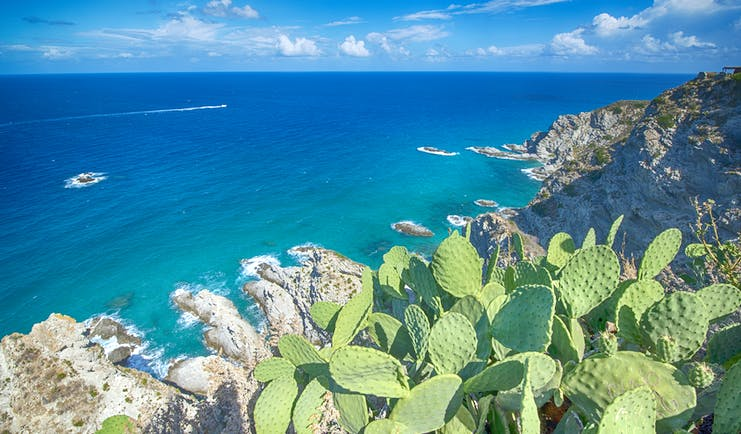 Cactus on the cliffs overlooking the emerald sea at Capo Vaticano in Calabria