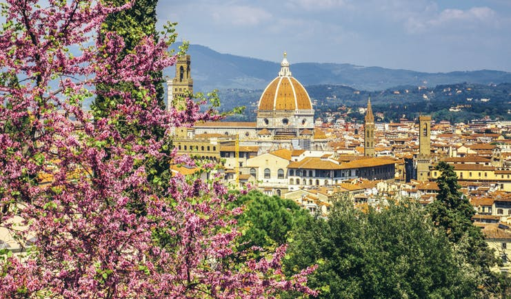 Springtime wisteria in foreground overlooking city of Florence with dome of the cathedral centrepoint