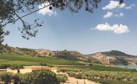 Lanscape with gently sloping vineyards and dry hills in the distance in Sicily