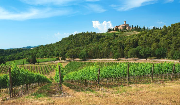 Rows of green vines with castle on top of hill near Montalcino
