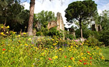 Ruined buildings surrounded by long grass with wild flower and trees