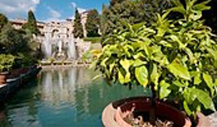 Tree in terracotta pot by water with fountains and stone work behind at the Villa d'Este Tivoli