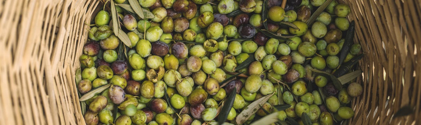 Basket full of green and black Italian olives