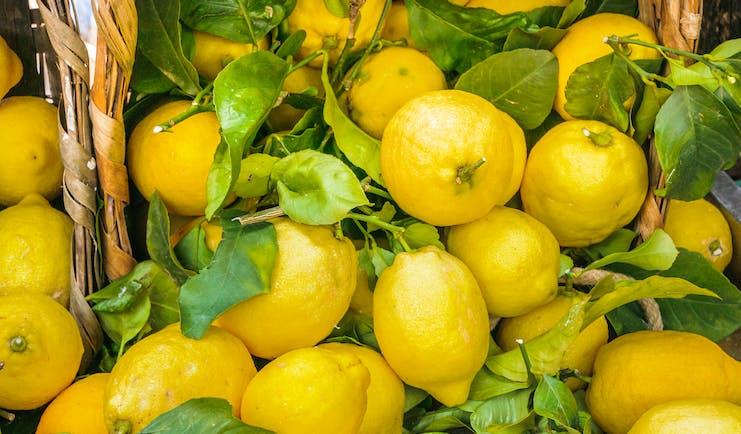 Basket of many lemons with green lemon leaves in between
