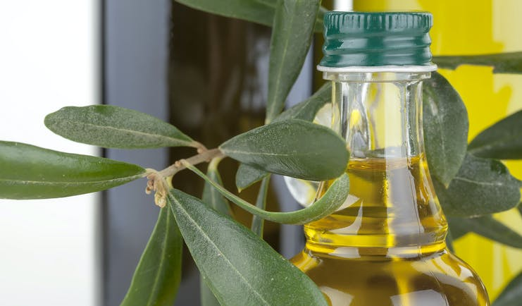 Bunch of olive leaves with olive oil in glass bottle Italy