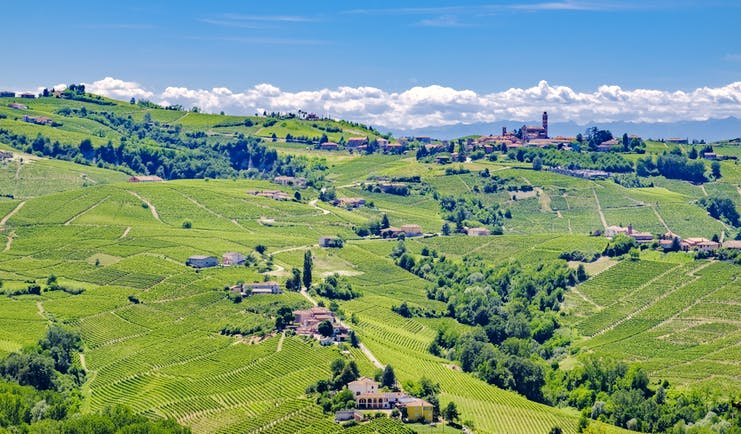 Landscape of patchwork of green vineyards of Barolo in Piemonte