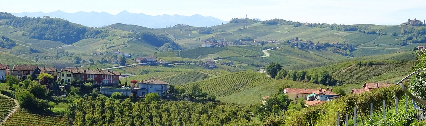 Grey green vinyeards over little hills in Barolo