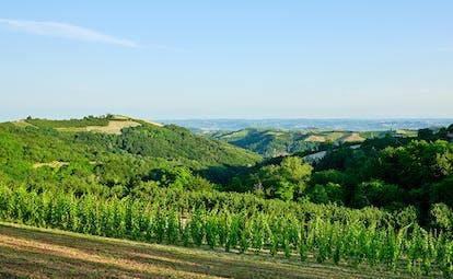 Villa D'Amelia Piemonte view of vineyards and hills