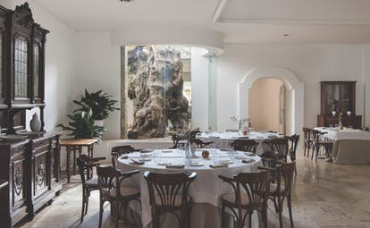 Il Melograno Puglia restaurant indoor dining window with view of tree trunk