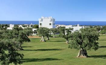 Olive trees on grass with white building and sea in distance