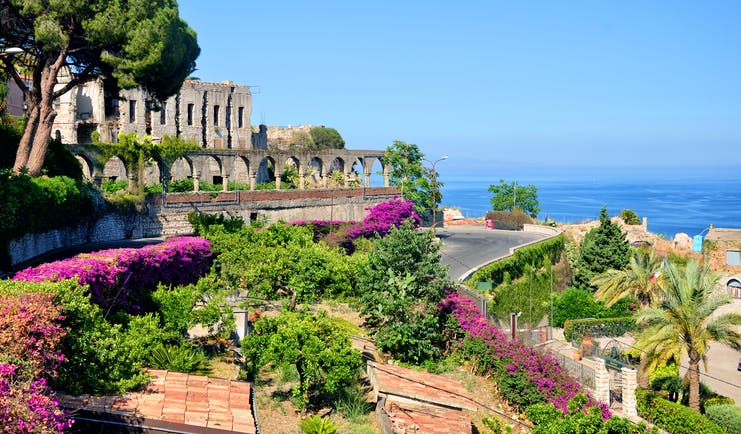 Side of the Greek theatre in Taormina with umbrella pine tree and pink bougainvillaea in terraces of the town