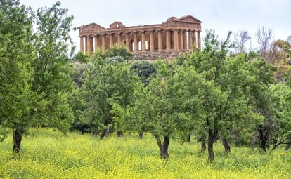 Greek temple of Concordia at Agrigento with trees in foreground