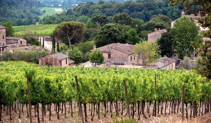 Castel Monastero Tuscany vineyard overlooking the village