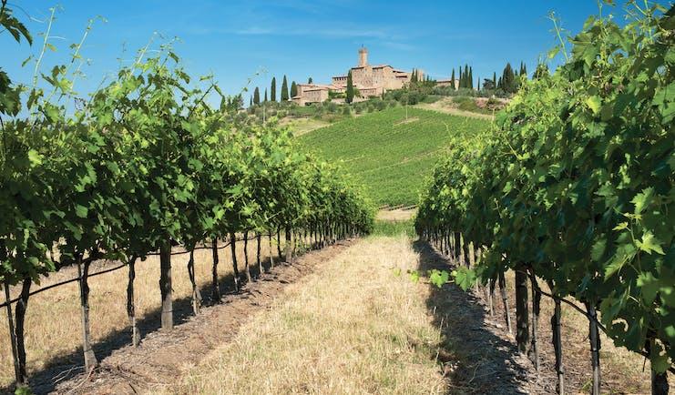 Castello banfi il Borgo vineyards with hotel in background