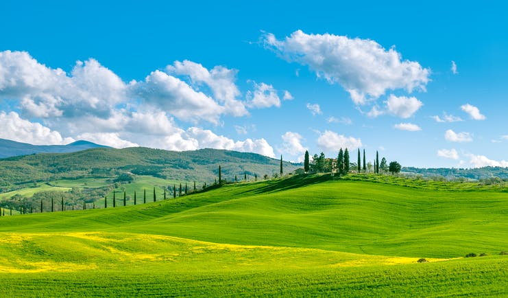 Rolling green hills with yellow flowers with cypress trees in background in Tuscany