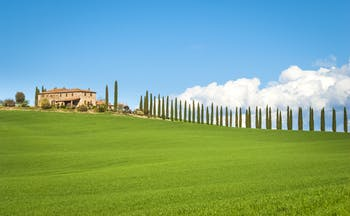 Green field, row of cypress trees on hill and farmhouse with red terracotta roof in Tuscany