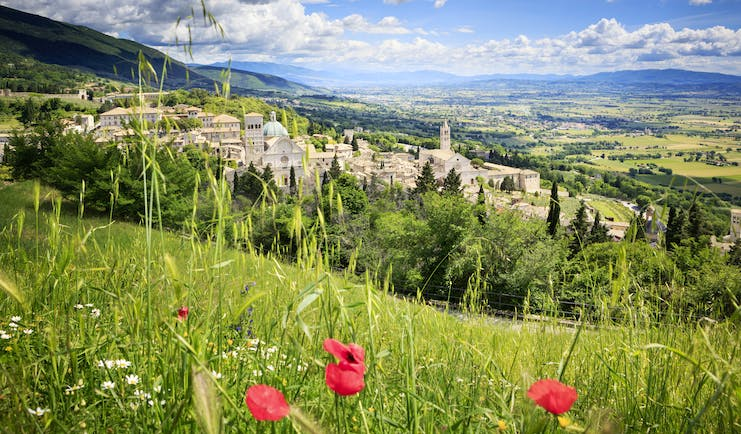 Landscape scene with fields with three poppies and the grey stone city of Assisi in the distance