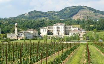 Palladian villa of Rinaldi Barbini near Asolo with rows of vines in spring