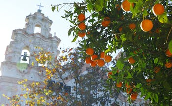 Oranges on tree with autumn leaves behind and then white baroque church with bell and cross of Carmen in Cadiz
