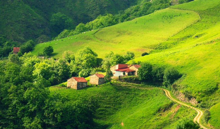 Sloping bright green hills with a few trees and farmhouses in Asturias