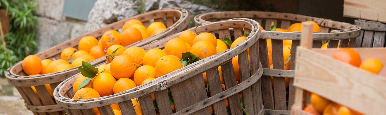 Wooden crates of oranges
