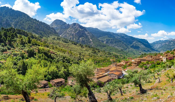 Panoramic scene with olive trees on hillside and ochre red village with mountains in the Tramuntana Mallorca