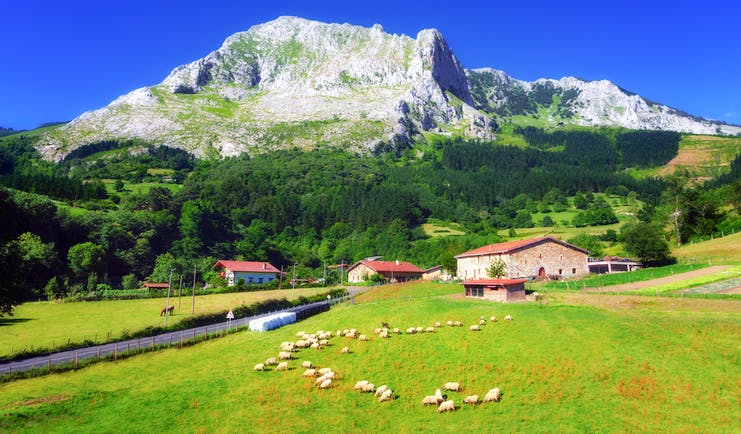 Country scene with fields and mountains with animals grazing in the Spanish Basque country