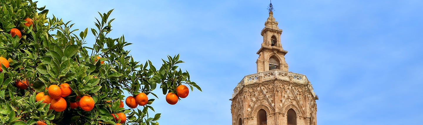Orange tree and spire in Valencia