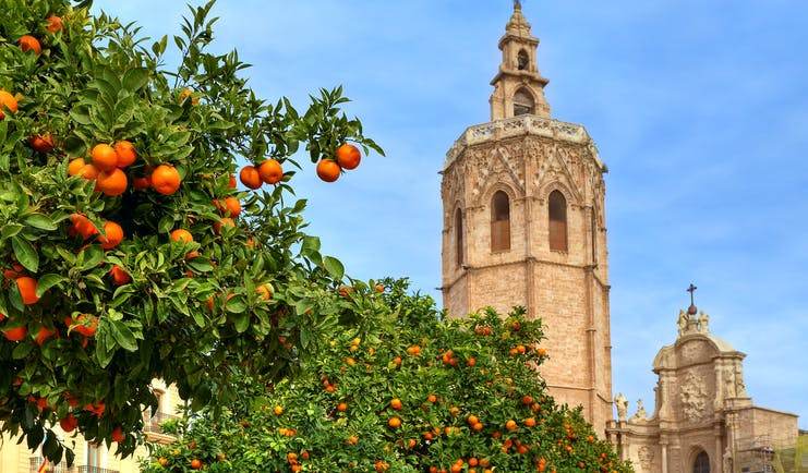 Orange tree and church spire in Valencia