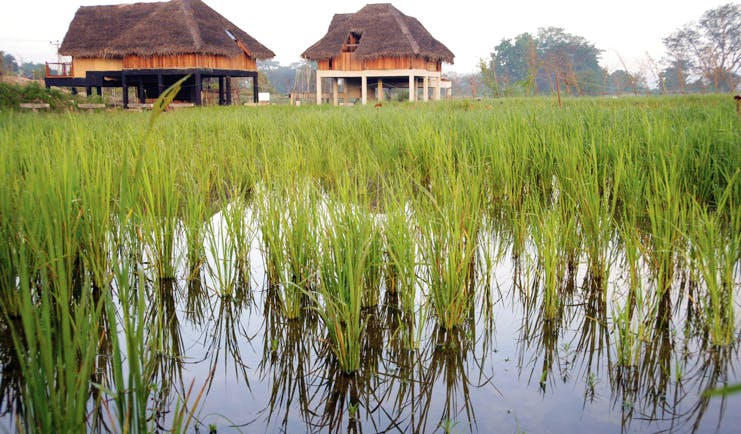 Jetwing Vil Uyana Sri Lanka views bungalows among the paddy fields