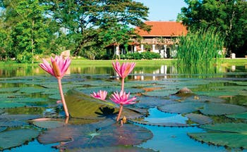 Ulagalla Resort Sri Lanka water lilies on pond gardens and hotel