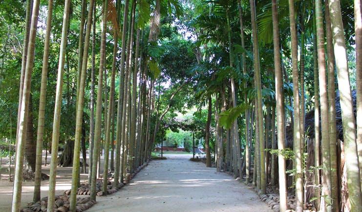 Ulpotha Sri Lanka palm tree walk dirt lane lined with palm trees