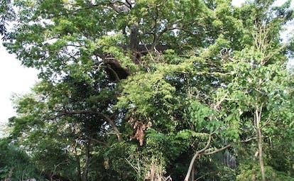 Ulpotha Sri Lanka treehouse in forest