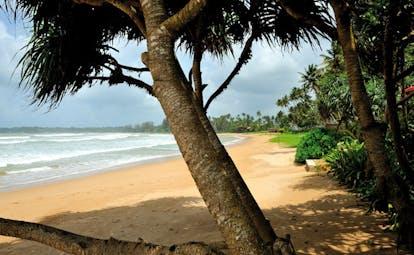 Weligama Bay Resort Sri Lanka beachfront with trees and gardens