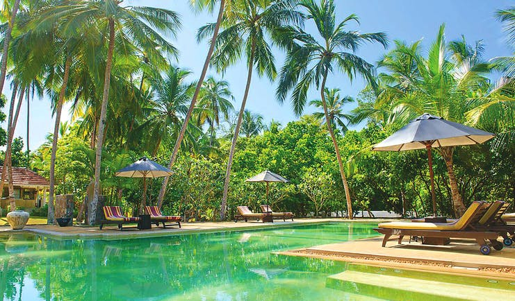 Why House Sri Lanka pool sun loungers umbrellas palm trees