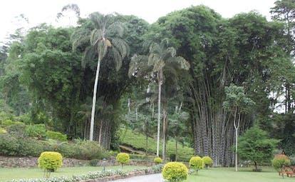 Ceylon Tea Trail Sri Lanka bamboo garden path through garden with bamboo trees