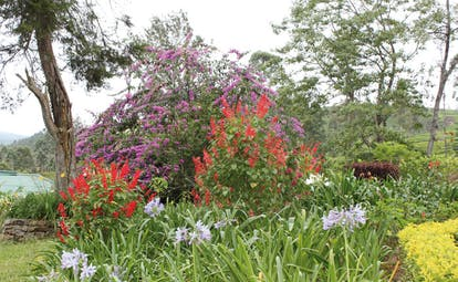 Ceylon Tea Trail Sri Lanka garden bushes with bright flowers