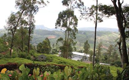 Ceylon Tea Trail Sri Lanka panoramic view of field trees and mountains