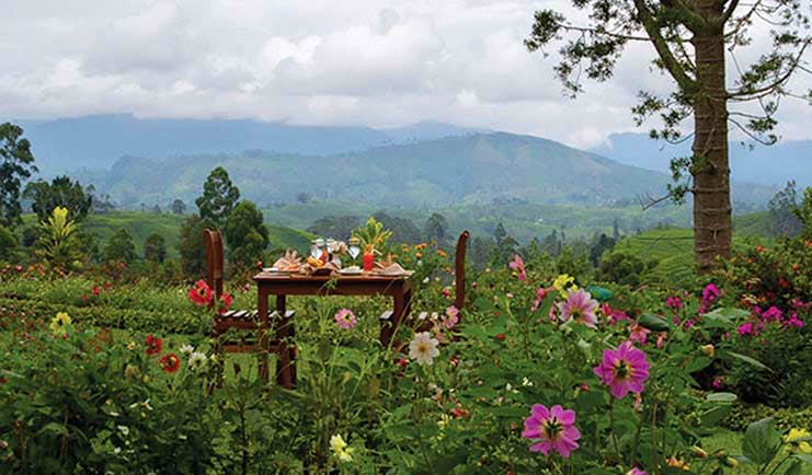Governor's Mansion Sri Lanka dining in the gardens mountains and tea fields in background