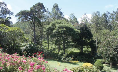 Kirchhayn Bungalow Sri Lanka garden trees flowers lawns