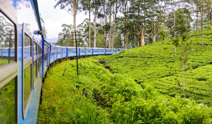 Train driving through tea and hill country, tea plants