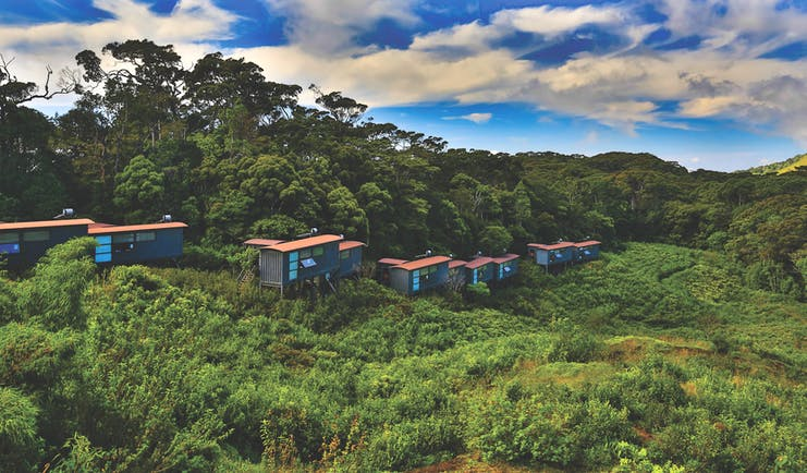 Rainforest Eco Lodge lodges nestled in treetops
