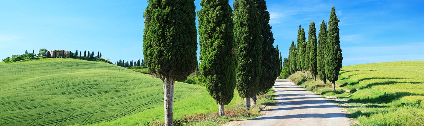 Line of tall green Cypress trees along a country road with green fields Tuscany