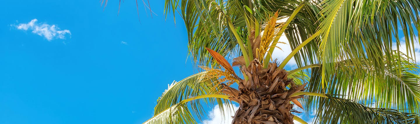 Looking up into palm tree against blue sky